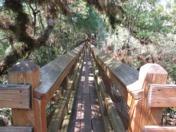 Myakka River Tree Walk