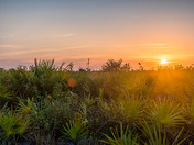 Sunset over Kissimmee Prairie State Park