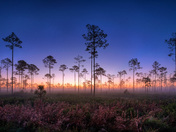 Sunrise at Highlands Hammock State Park