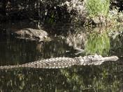 Gators livin the good life