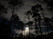 Beaver Moon at Highlands Hammock