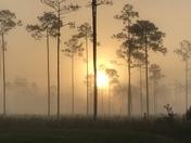 Sunrise at Highlands Hammock