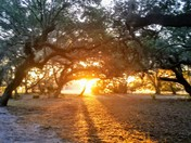 Sunrise at Kissimmee State Park