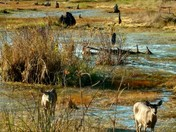 Marshland Sanctuary