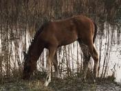 Wildlife on the Prairie