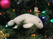 Christmas Tree Manatee At Blue Spring Gift Shop