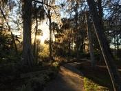 Walking Path - Silver Springs