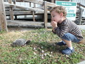 Babies and tortoises