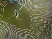 Spider on Their Web