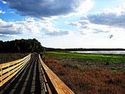Myakka Boardwalk Nature_3478