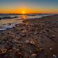 Winter seashells at Anastasia State Park Beach