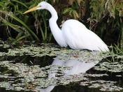Wildlife Reflection