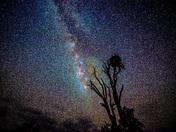 Nesting in the Milky Way