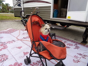 Camping Canine