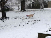 Alvin playing in the snow