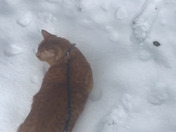 Ginger did NOT enjoy being outside in the snow (and yes as you can see I'm barefoot)