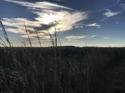 Floridas open prairie