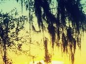 Love Florida Sun sets