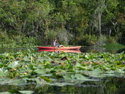 Kayaking Lake Griffin