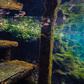 Underwater Dreams!