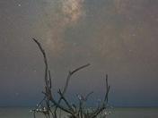 Shell Tree under the Milky Way