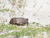 Tortoise Dune