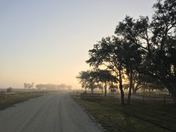 Misty Morning at Kissimmee Prairie Preserve