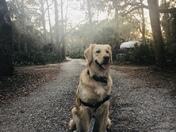 Pup Adventures at Oscar Scherer State Park