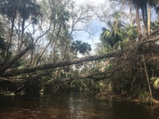 Wekiva State Park - Gorgeous river for kayaking