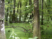 The winter swamp