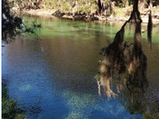 Serenity with Manatees
