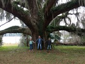 New Year's Eve at Maclay Gardens State Park