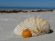Shell collecting.....