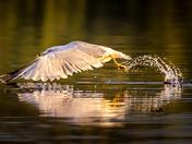 Symmetrical Seagull