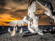 Close up of seagulls