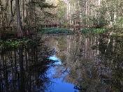 Blue Water Swamp