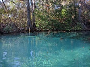 Awesome Adventure on the Weeki Wachee River
