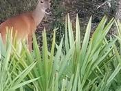 Curious Onlooker
