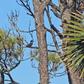 Kingfisher Taking A Break