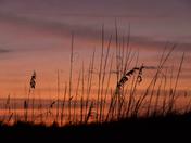 Winter's Amber Waves of Grain