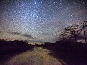Starry night in the Everglades