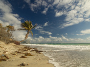 Sideways Palm