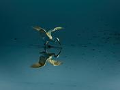 Spoonbill pond
