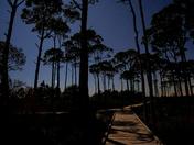 Moonlit boardwalk