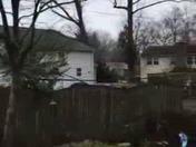 MORE TREES FALLEN
