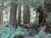 Big Trees, Little People