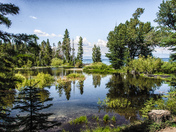Sugar Pine Pond