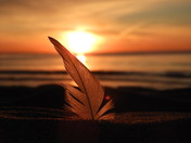 Seagull Feather at Sunset