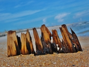 Old Stumps at St George Island