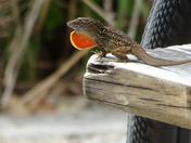 Flashy Lizard